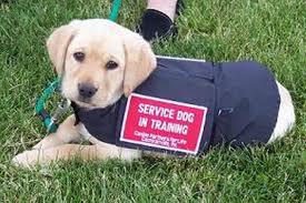 Fake Service Dog Gear Creates Problems