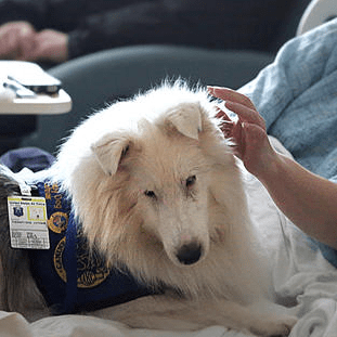 Deaf therapy dog provides support to Langley patients